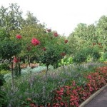 Terrace Garden- Duke University