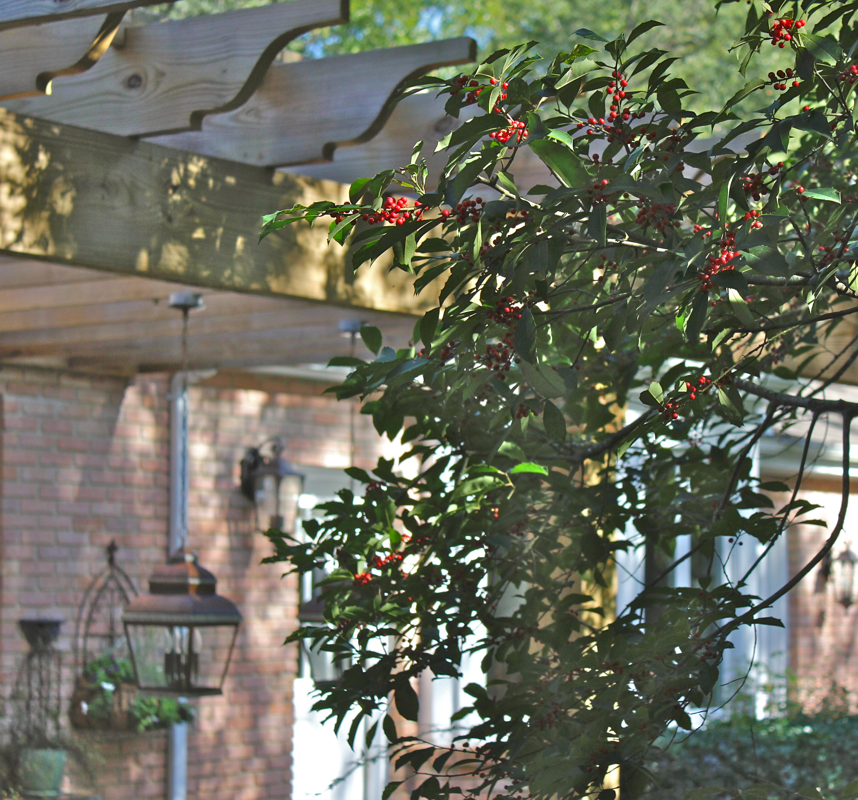 Blog 171 Simply Gardens